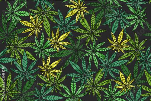 Fényképezés Cannabis color pattern