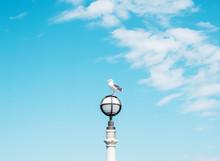 Seagull On Pier Light Post