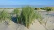 Dünenlandschaft am Meer in Zeeland, Niederlande