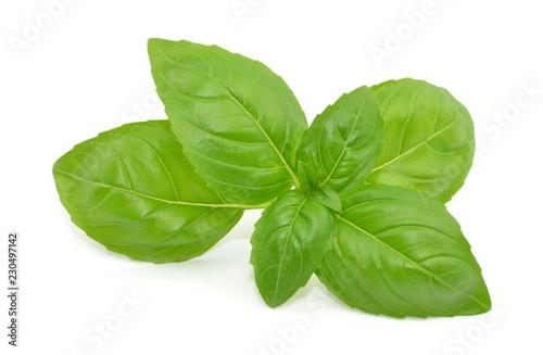 liść bazylii
