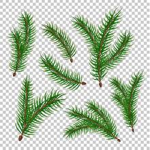 Vector Realistic Spruce Fir Tree Branches Set