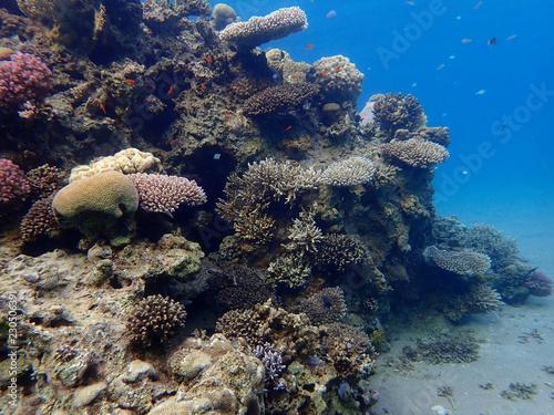 Staande foto Koraalriffen Coral reefs at the bottom
