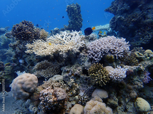 Spoed Foto op Canvas Koraalriffen Coral reefs at the bottom