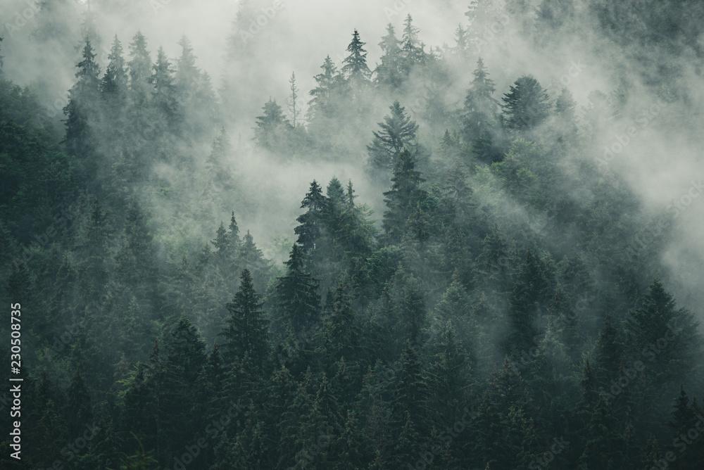 Las jodłowy we mgle