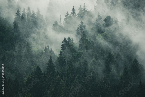 Aluminium Prints Dark grey Misty landscape with fir forest in hipster vintage retro style