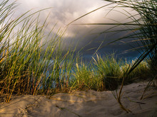 View From Below Through Marram...