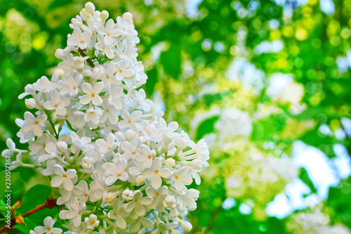 In de dag Zwavel geel Bright and colorful flowers lilac