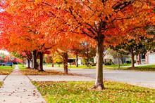 Suburban Neighborhood Sidewalk And Street In Autumn Looking Downhill