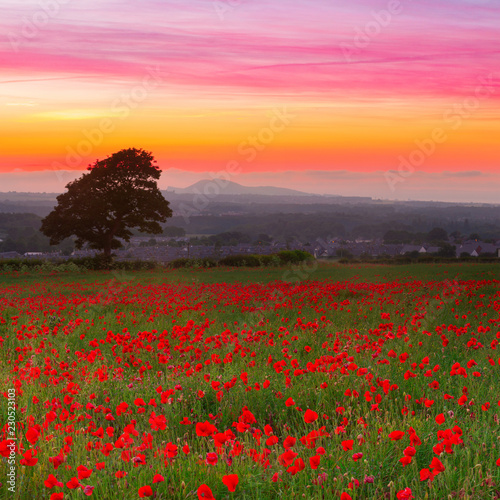 Beautiful red poppies field landscape with colorful sunset sky