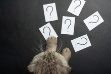 The Cat Is Trying To Sneak Stickers With A Question Mark