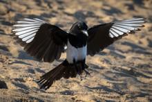 Magpie Landing
