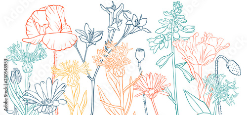 vector drawing poppy flowers - 230548953