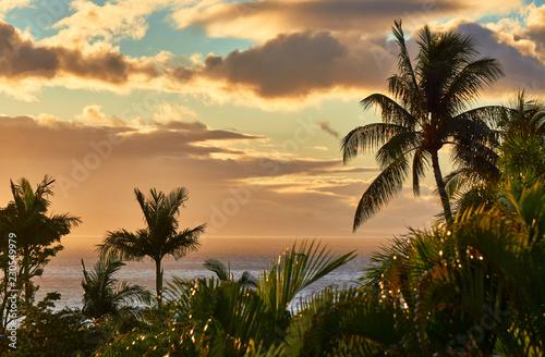 Obraz na plátně Tropical palm trees in Maui sunset