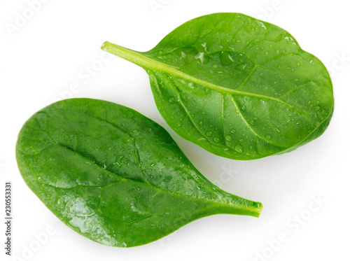 Fresh spinach on white background