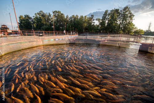 Fotografia Farm for breeding trout