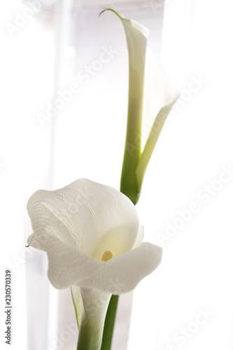 Foto white calla lily on white light