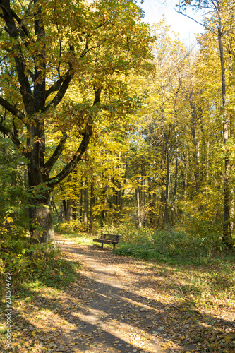 Foto op Plexiglas Meloen Autumn landscape. Pathway in the autumn park