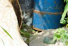 Little Kittens On A Walk In The Yard