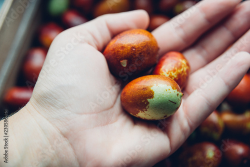 Valokuvatapetti Ripe broun jujube chinese dates on the hand, close up