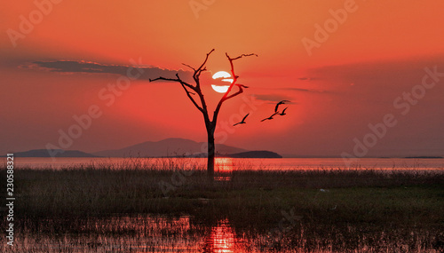 Foto auf AluDibond Ziegel Scenic sunset view of Lake Kariba with the sun setting just behind a bare dead tree with good clouds. Lake Kariba, Matusadona National Park, Zimbabwe