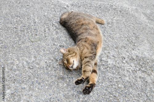 Guten Morgen Katze Buy This Stock Photo And Explore