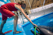 Woman Trainer And Dolphin. Fem...