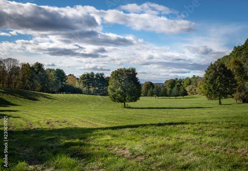Fotografie, Obraz  Lone Maple Tree in a Hudson Valley Hayfield