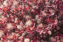 Autumn Autumn Foliage Red Maro...