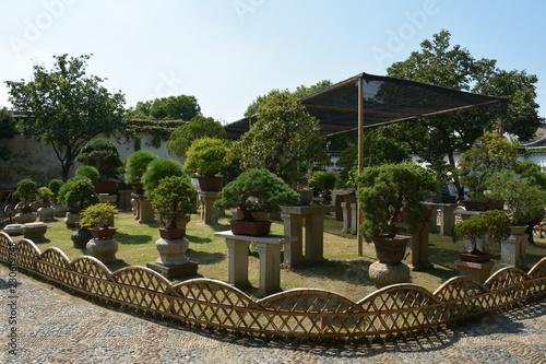 Αφίσα  Bonsai tree in a garden. Row of bonsai trees.