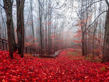 Red Autumn Forest Mist Stairway Landscape