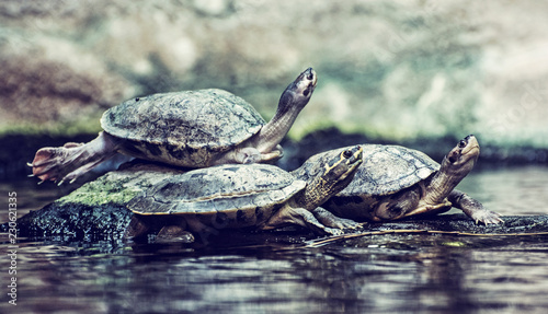 Turtles are heated on stone, old filter