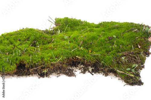 Fotomural piece of moss on a white background
