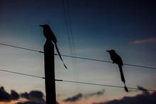El Pájaro Del Silencio