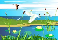 White  Heron, Goose Flying,  L...