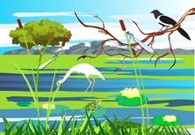 White  Heron, Magpie On The Tr...