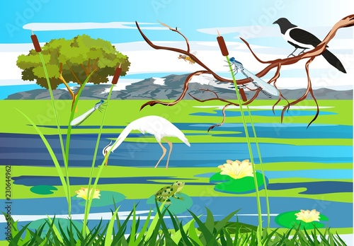 White heron, magpie on the tree brunch lake, gragonflies, wetland landscape, vector wildlife