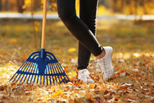 Woman Cleaning Up Fallen Leave...