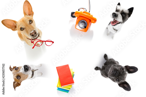 Staande foto Crazy dog office worker businessman couple of team dogs