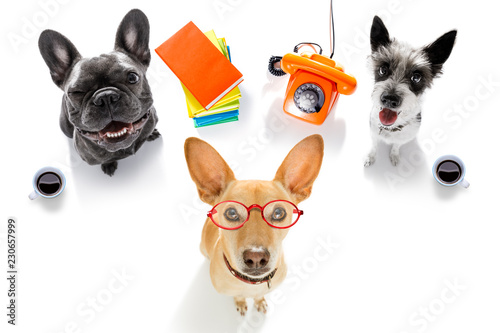Foto op Canvas Crazy dog office worker businessman couple of team dogs