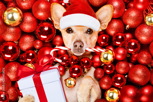 Staande foto Crazy dog christmas santa claus dog and xmas balls