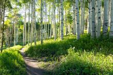 A Beautiful Summer Hiking Trai...