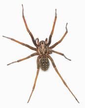 Predatory Spider