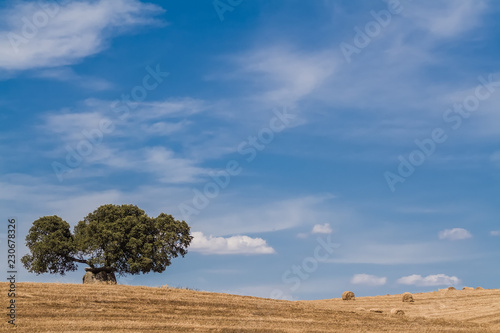 Harvest on farmland. Countryside with hay or wheat straw bales. Dolmen and Cork Oak. Southern European or Mediterranean landscape. Alentejo, Portugal
