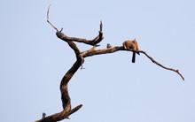 Unidentified Bird On A Tree