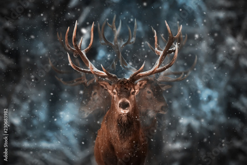 Poster Cerf Noble deer male in winter snow forest. Multi exposure