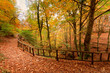 Deciduous forest in Greece Pieria, near the mountain village Ano Milia