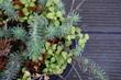 Pflanze Terasse