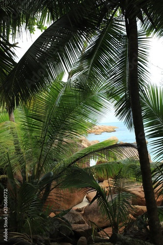 Foto op Canvas Palm boom Palm tree