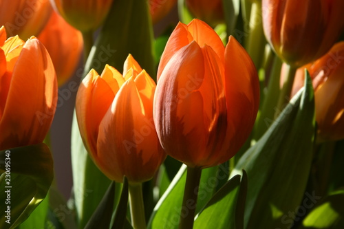Canvas Prints Flower shop een boeket oranje tulpen in een vaas