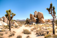 Joshua Tree National Park With Its Typical Trees And Rock Formations Near Palm Springs In The California Desert In The USA
